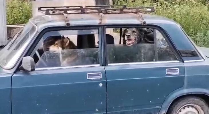 """В Рязани засняли """"хорошего мальчика"""" за рулем"""