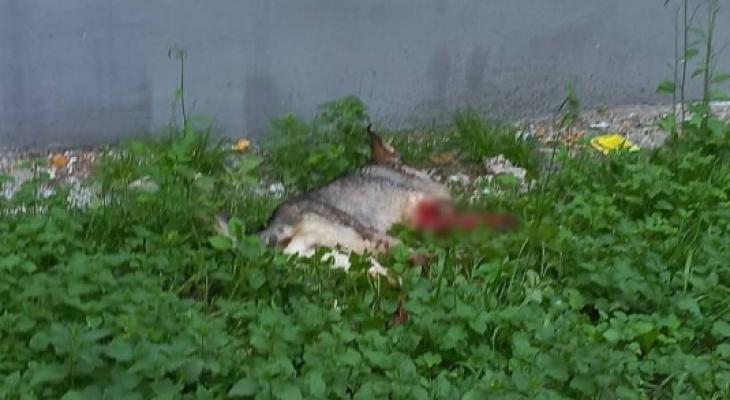 Ужасная история: подробности нападения на собаку на улице Великанова