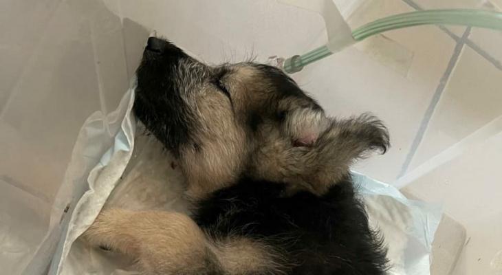 Ужасающая жестокость: в Рязани щенка выкинули из окна за то, что он укусил хозяйку
