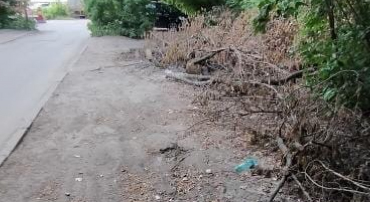 Мэрия: спиленные деревья на Бутырках уберут на этой неделе