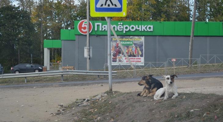 Новые жертвы бродячих  собак: в Пронске загрызли пять коз