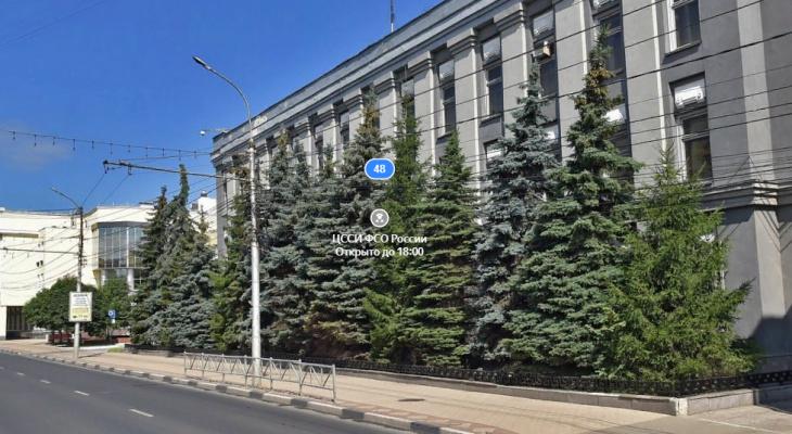 Урбанисты привели аргументы, почему нельзя спиливать голубые ели на Ленина