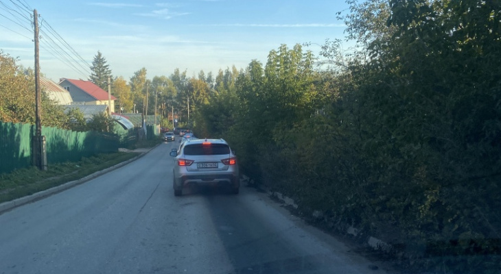 «Напишите заявку, а мы её рассмотрим»: горожане жалуются на аварийные деревья по улице Серёжина Гора