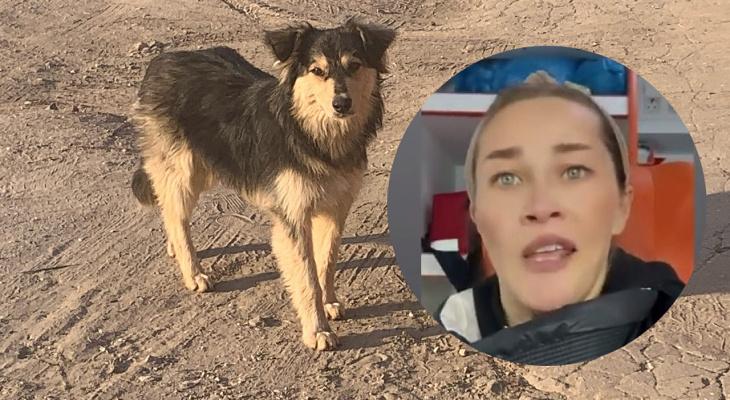 В Рязани девочка попала в больницу после нападения собак: мать требует принять меры