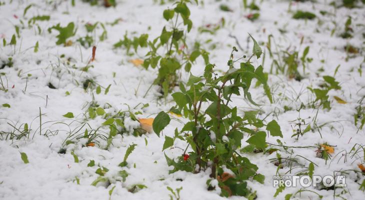 Еще не зима: первый снег в Рязани выпадет в среду