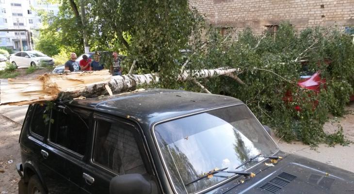 В Строителе дерево упало на припаркованные машины