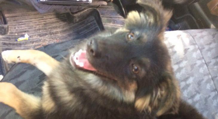 Охранника, выкинувшего щенка из окна, отстранили от работы