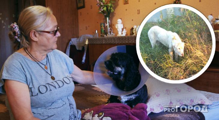 В Рязани азиатская овчарка напала на женщину с собакой